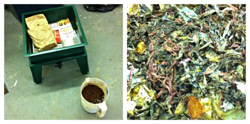 Worm Bin Collage