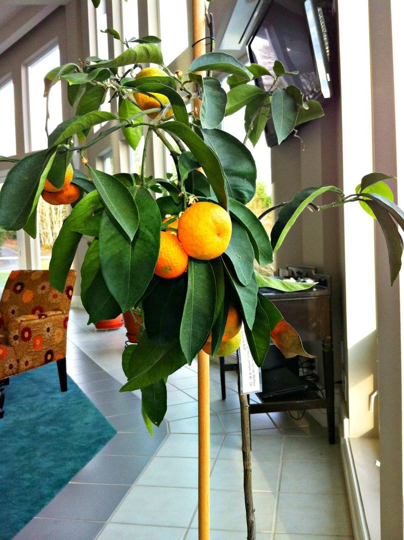 Oranges Galore