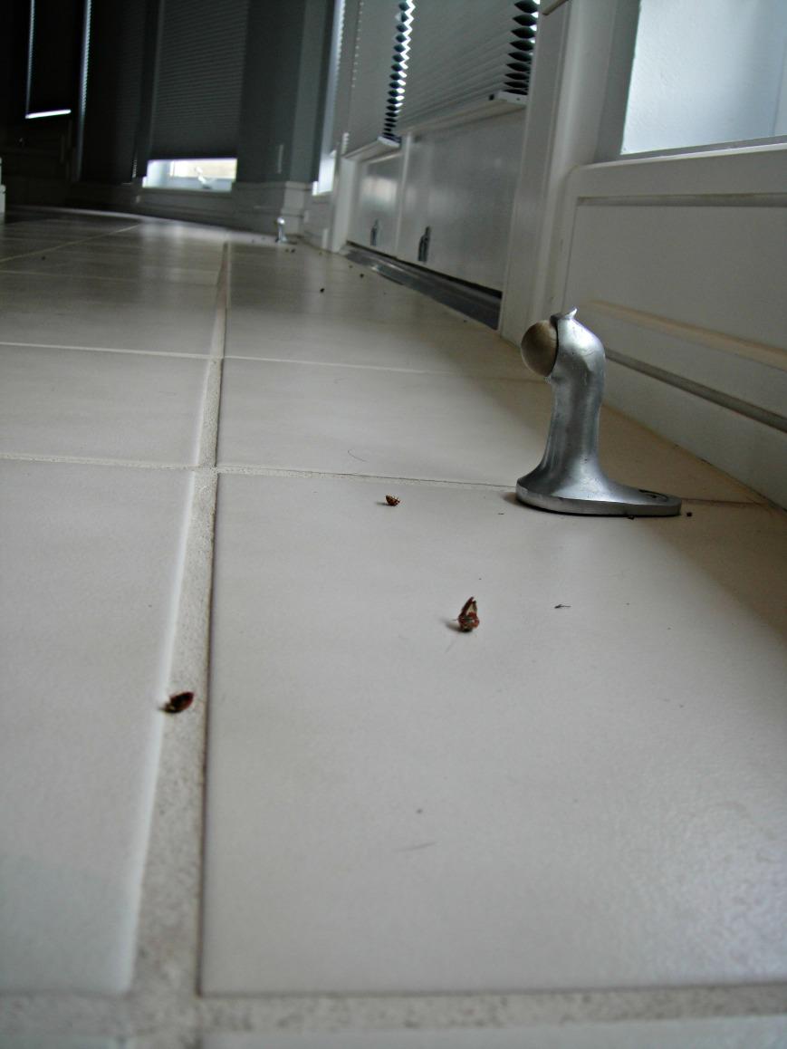 Dead Ladybugs