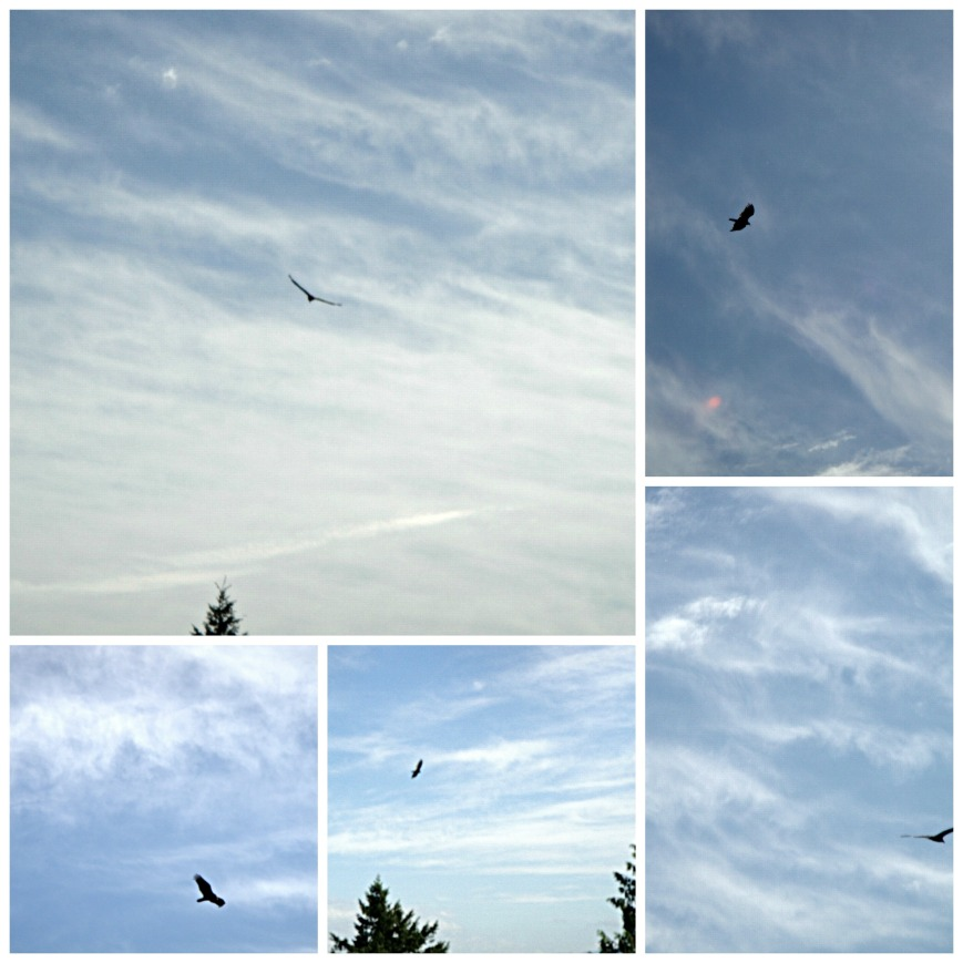 Eagles 2 Collage
