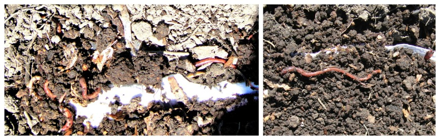 Worms in the Wild Collage