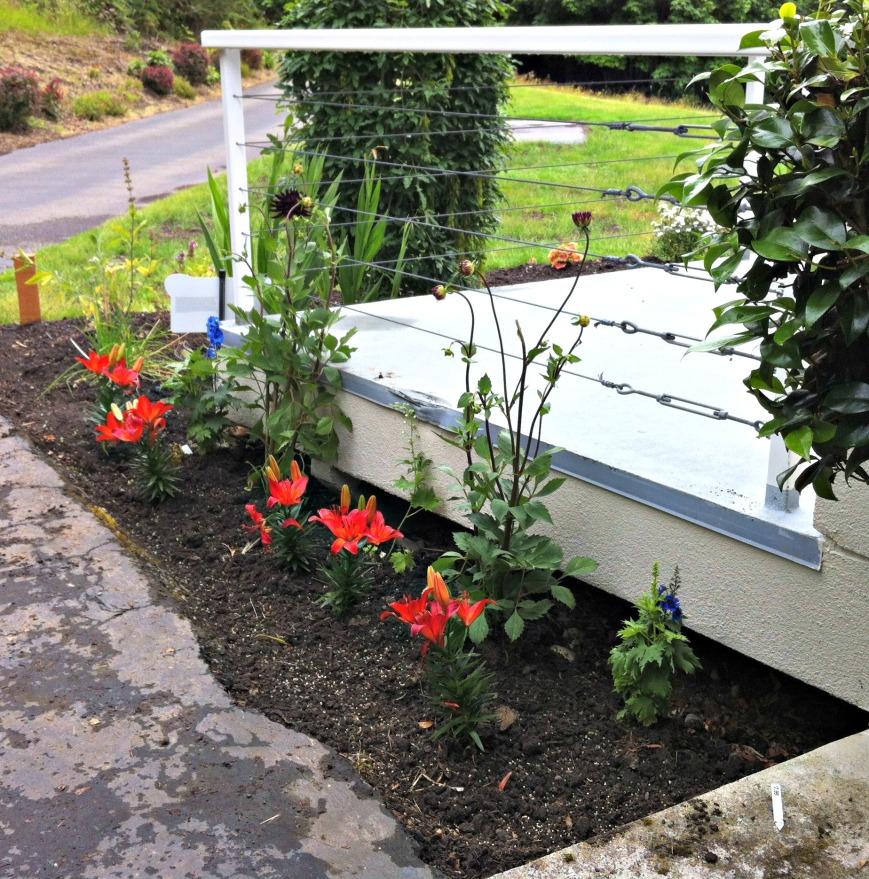 New Flower bed