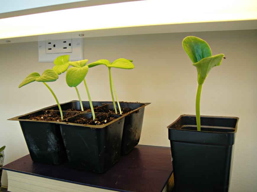 Seed Success