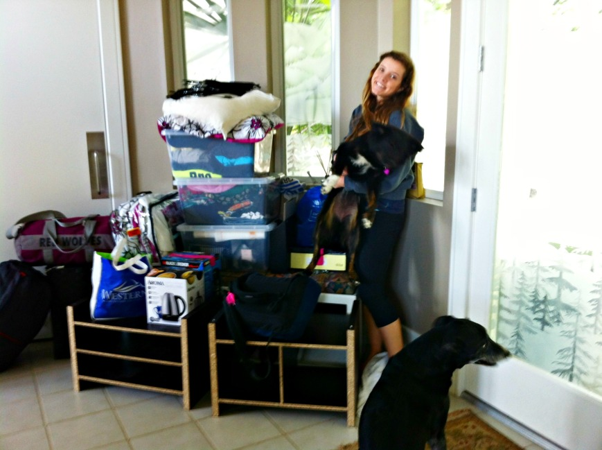 Sweet Miss moving home with dogs