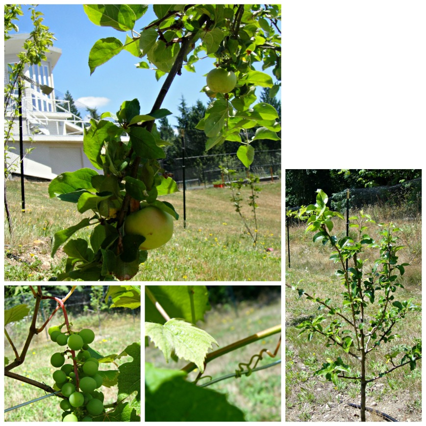 The Orchard Collage