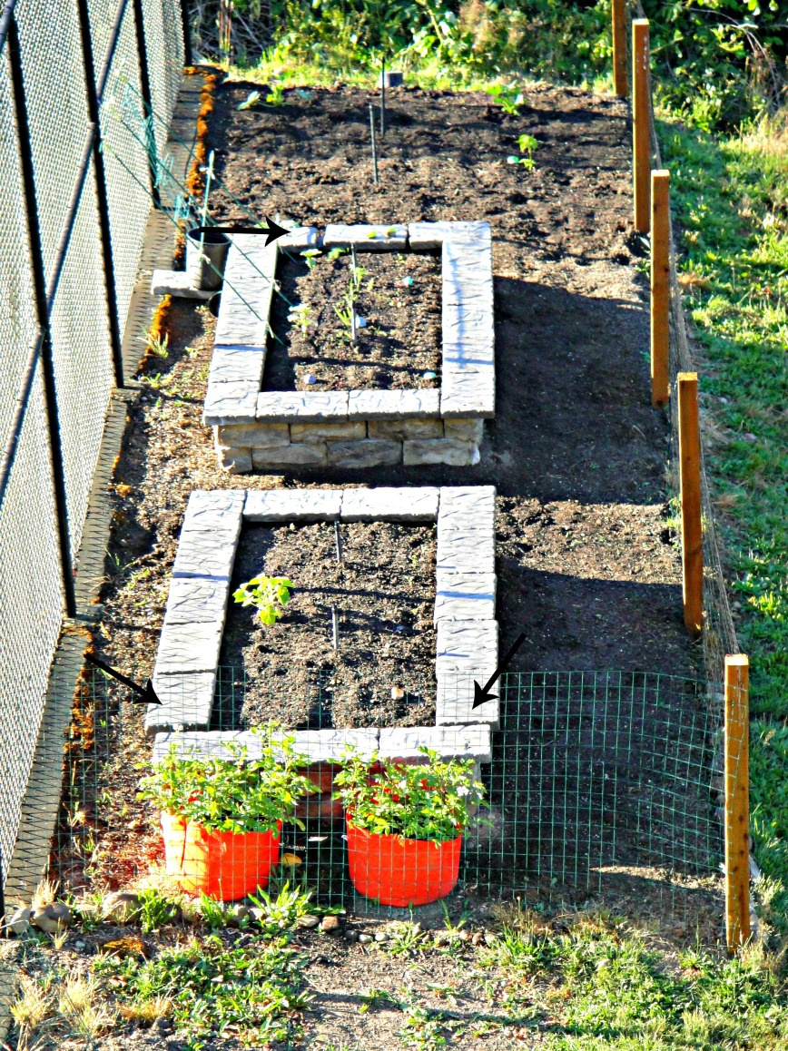 Garden from Deck Closer with arrows