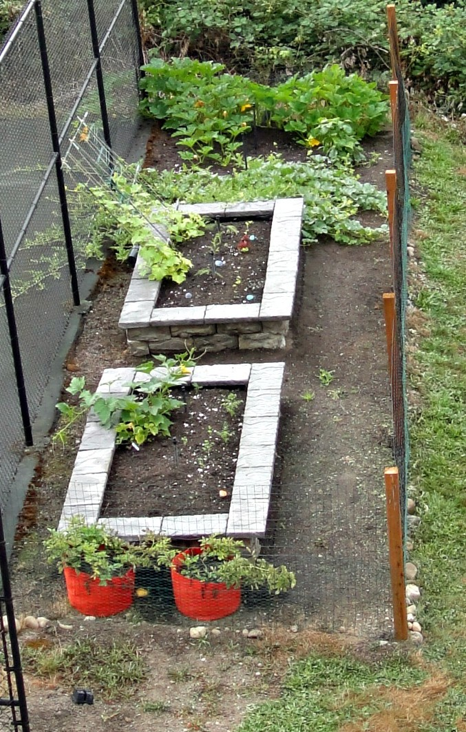 Overhead of garden beds