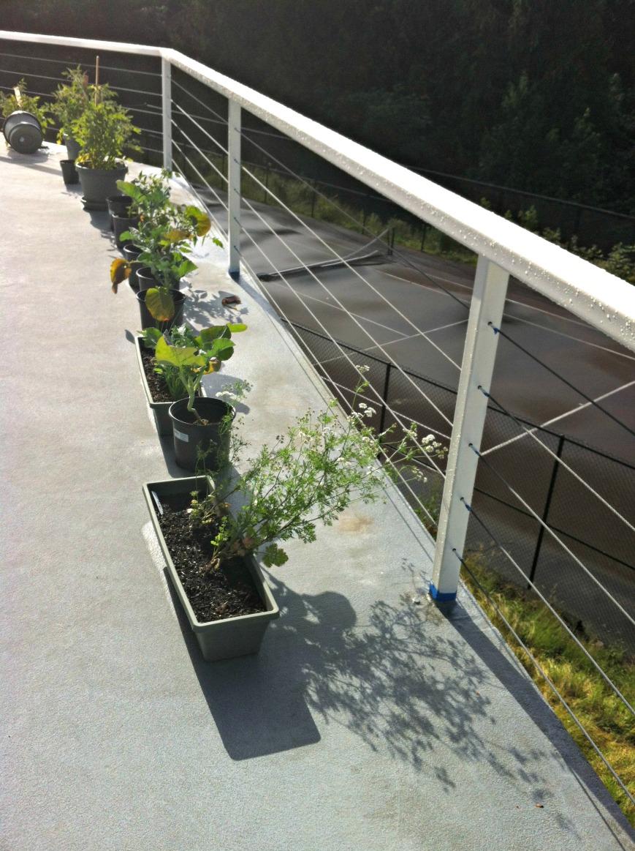 Garden last year