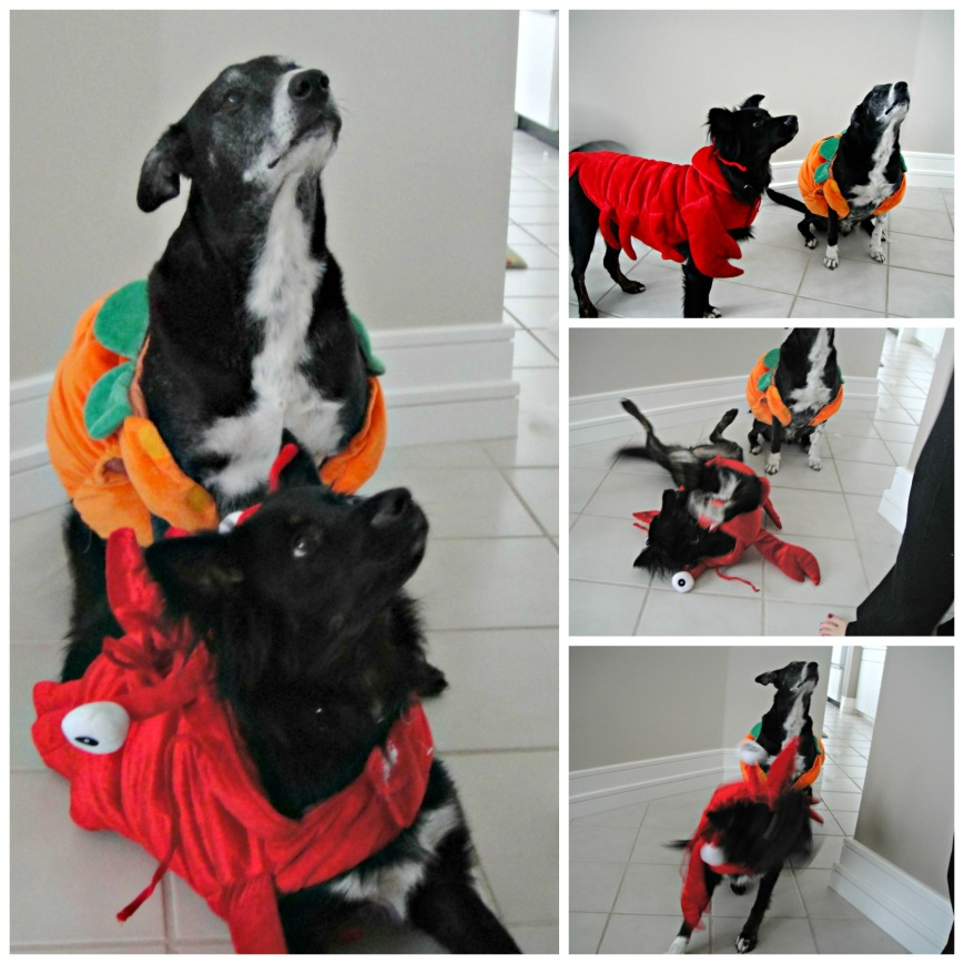 Doggie Costume Collage