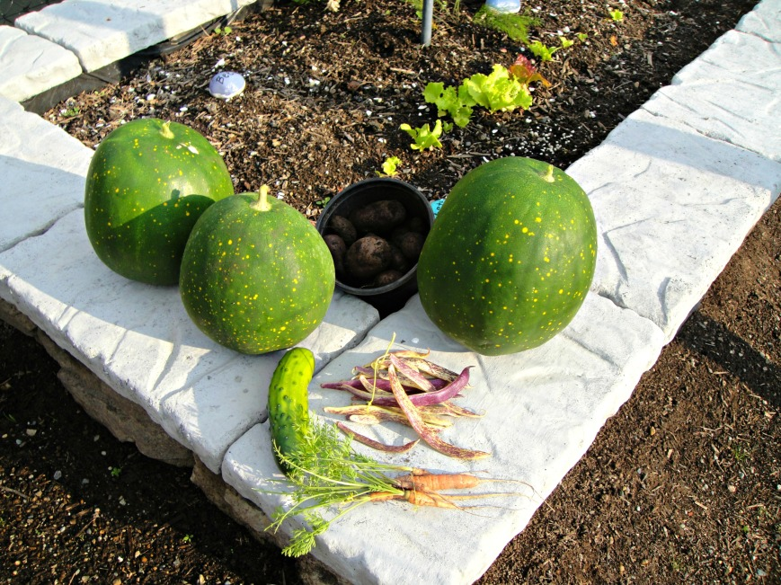 Watermelon Cucumbers Beans and Potatoes