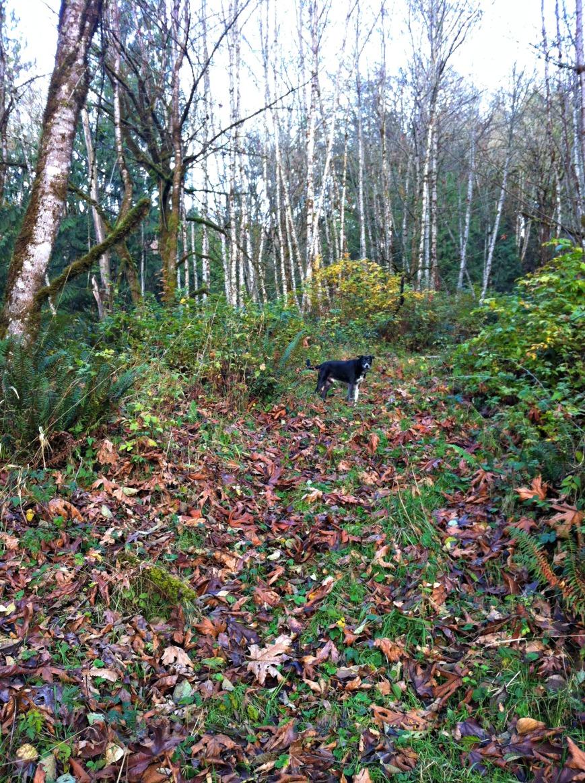Trail & Bogey