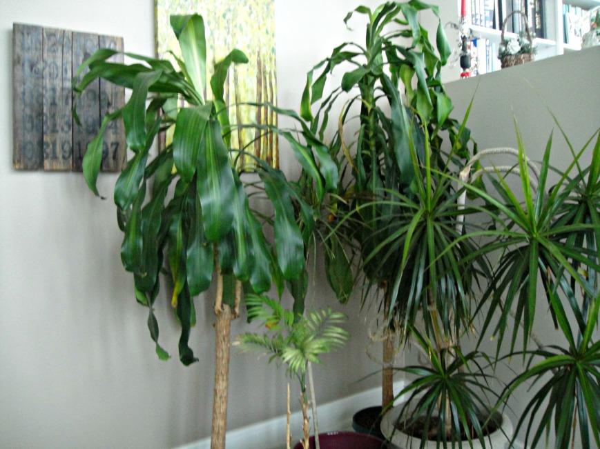 Cornplants 2