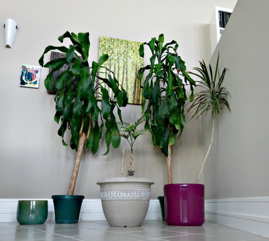 Plants & Pot