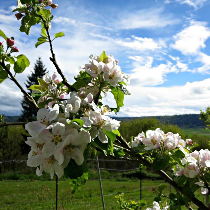 Blossoms & Sky