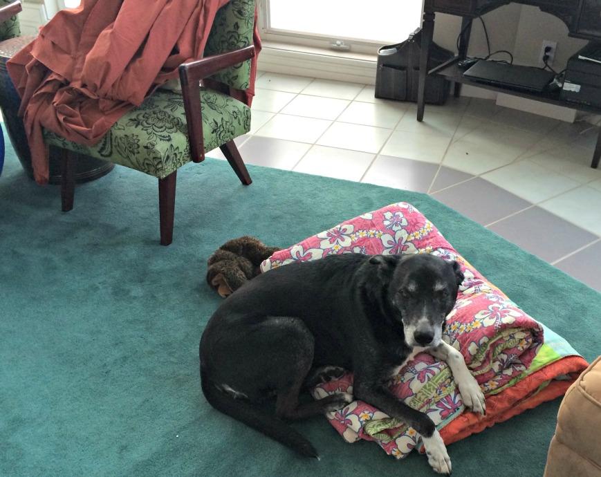 Bogart and blankets