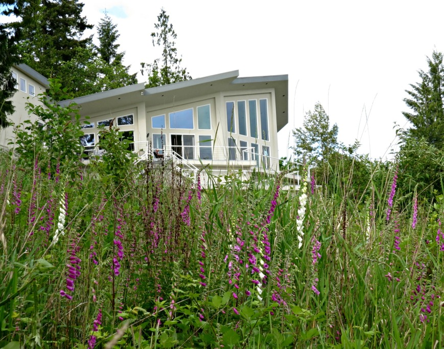 Foxgloves and House Zoom