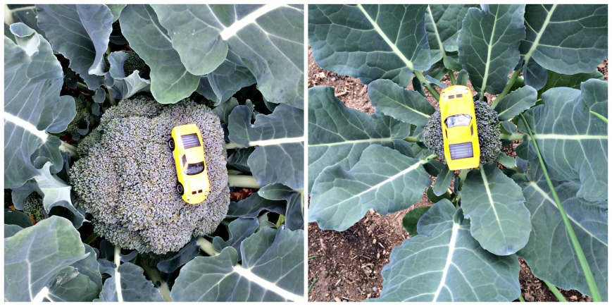 Broccoli with Car Collage