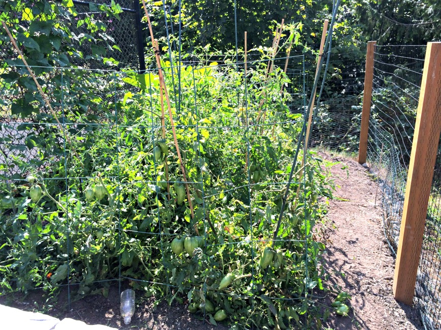 Tomato Jungle trussed