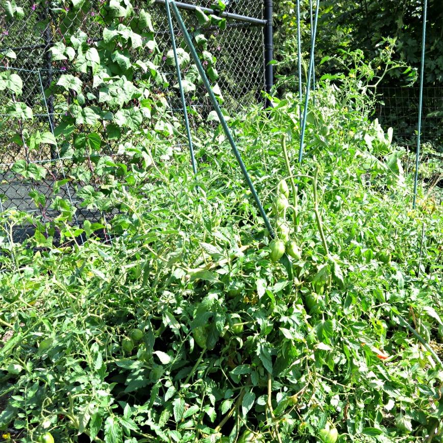 Tomato Jungle