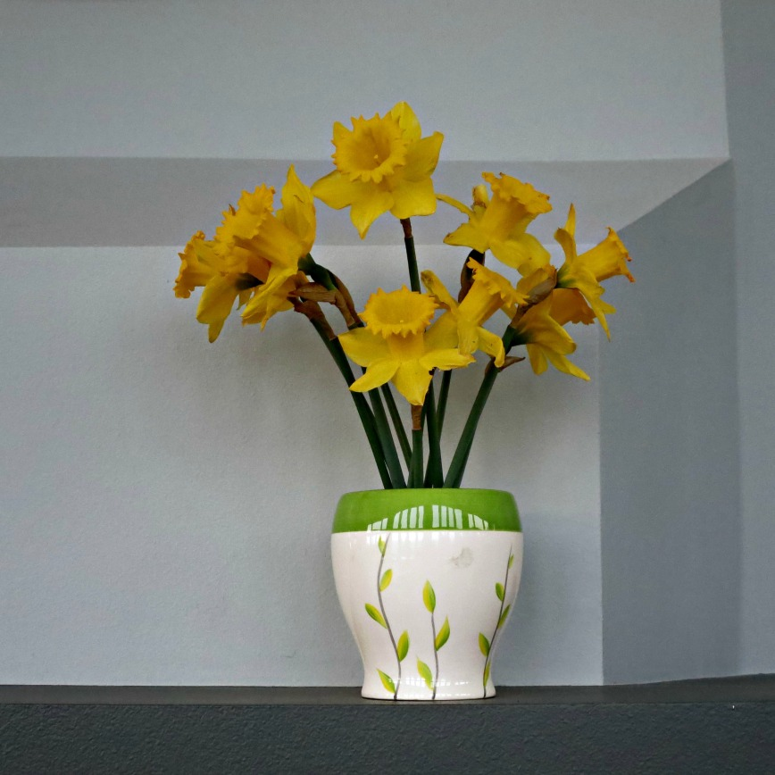 Daffodils against angles