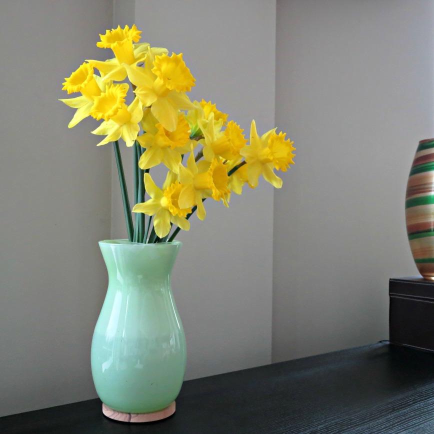 BU Daffodils