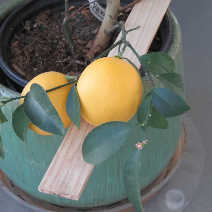 AR Lemons
