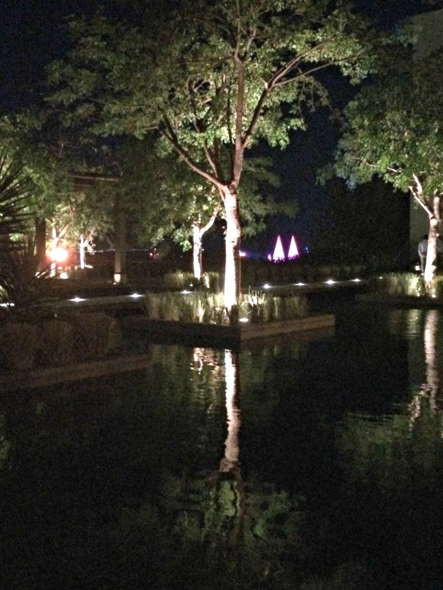 ToT2 Nighttime pond
