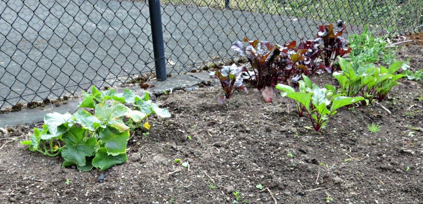 Garden Cuc & Beets