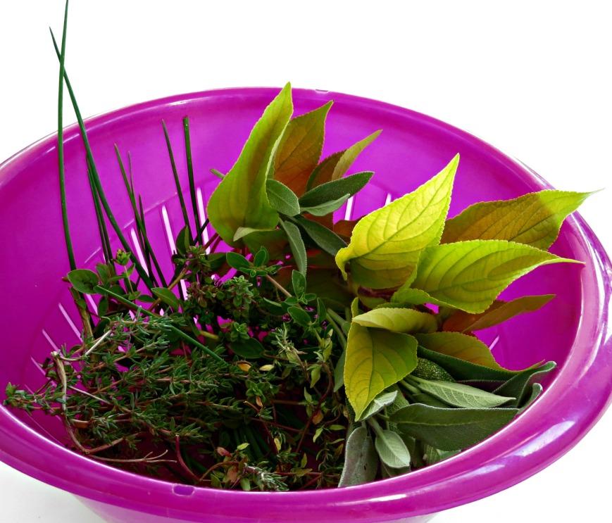 Herbs in Colander