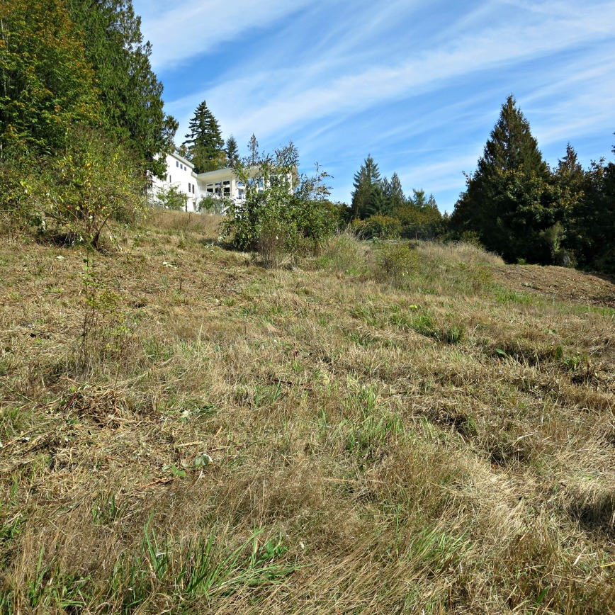co-cleared-area-with-house