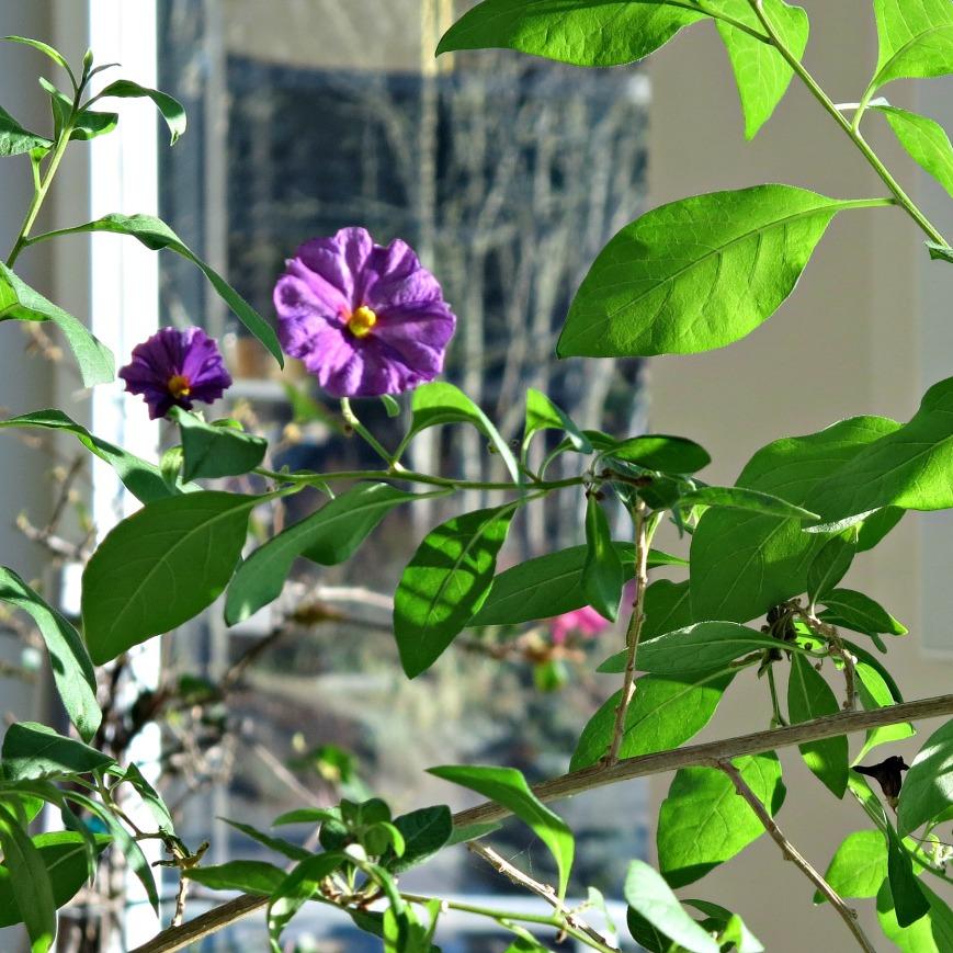 wb-blue-flowers